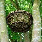 Nest voor ransuil en boomvalk