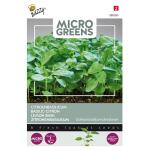 Microgreens citroenbasilicum