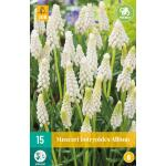 Muscari botryoides album - wit druifje (15 stuks)