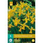 Narcissus February Gold - botanische narcis (5 stuks)