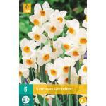 Narcissus Geranium - meerbloemige narcis
