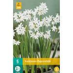 Narcissus Paperwhite - kamercultuur (5 stuks)