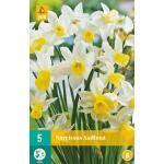 Narcissus Sailboat - botanische narcis (5 stuks)