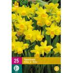 Narcissus Tête-à-Tête - botanische narcis