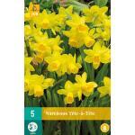 Narcissus Tête-à-Tête - botanische narcis (5 stuks)