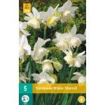 Narcissus White Marvel - botanische narcis