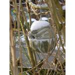 Nestbal houtbeton - winterkoning - Schwegler