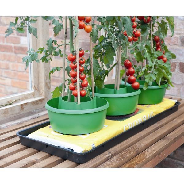 Potten Voor Planten.Potten Om Tomaten In Te Kweken Tomaten Kweken In Gietpotten