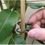 Plantenclips kunststof