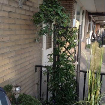 Klimrek Voor Planten.Plantenbak Met Klimrek Kopen Plantenbak Voor Op Het Terras