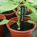Plantenlabels zwart kunststof - 15 cm (50 stuks)