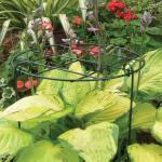 Plantensteun groeiraster 30 x 46 cm