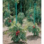 Plantensteun voor tomaten met waterreserve 1,5 m