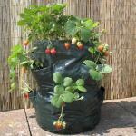 Beplantingszakken voor terras of balkon (2 stuks)