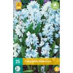 Puschkinia libanotica - Buishyacint