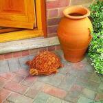 Schildpad schoenborstel kokos