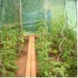 Tomatenspiralen - set van tien stuks