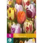 Tulipa Flaming Beauty mix - tweekleurige tulp (15 stuks)