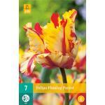 Tulipa Flaming Parrot - parkiet tulp (7 stuks)