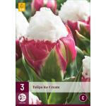Tulipa Ice Cream - Tulp dubbellaat