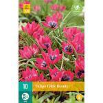 Tulipa Little Beauty -  botanische tulp (10 stuks)