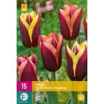 Tulipa My Favourite Topping - Triumph tulp (15 stuks)