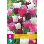 Tulipa Pastel mix - Triumph tulp (15 stuks)
