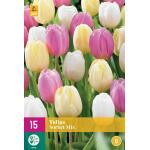 Tulipa Sorbet Mix - enkele late tulp