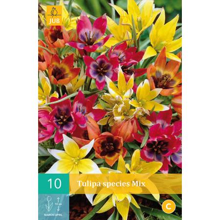 Tulipa Species mix