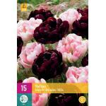 Tulipa Sweet Desire mix - dubbele late tulp