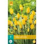 Tulipa sylvestris - botanische tulp