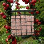 Vetblok met bosvruchten