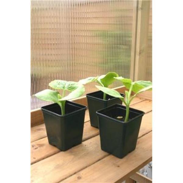 Potten Voor Planten.Vierkante Pot Kopen Om Zaailingen En Stekken In Op Te Potten