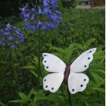 Vlinder wit op krulpin