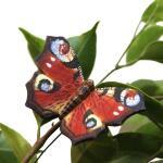 Vlindermagneet dagpauwoog