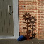 Zonnebloem in pot - decoroest