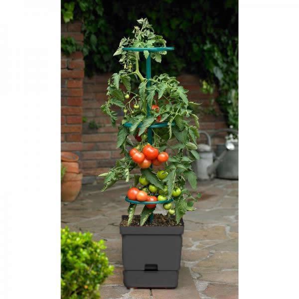 Tomatentoren met waterreservoir