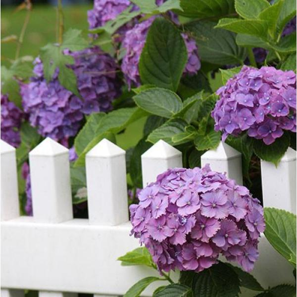 Tuinposter hek en bloem 1 x 1 m