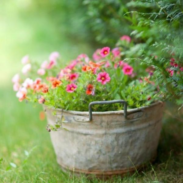 Tuinposter bloemen in teil 1 x 1 m