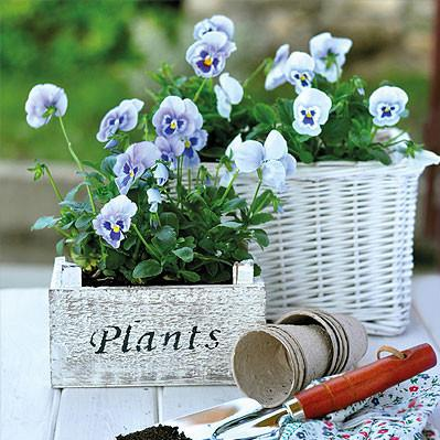 Tuinposter viooltjes 1 x 1 m