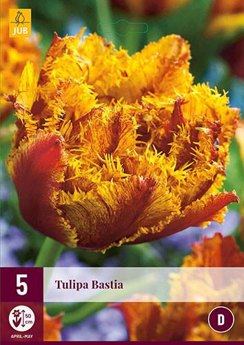 Tulipa BastiaTulp gefranjerd