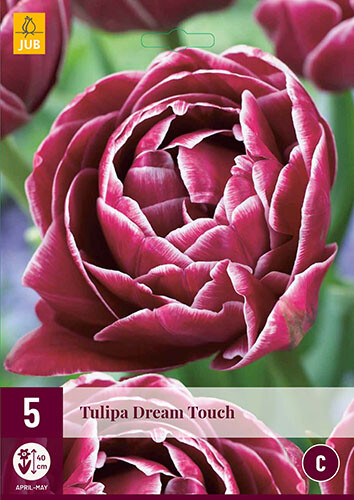 Tulipa Dream TouchTulp dubbellaat