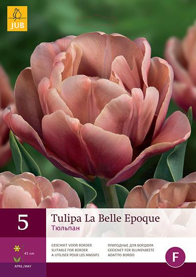 Tulipa La Belle EpoqueTulp dubbelvroeg