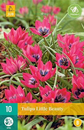 Tulipa Little Beauty botanische tulp