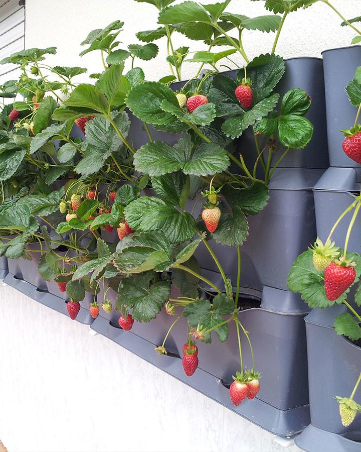 Plantbakken verticale tuin grijsmodulair
