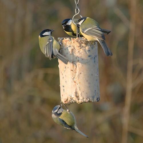 Afbeelding Wildbird Pindacake - Voer - Insecten