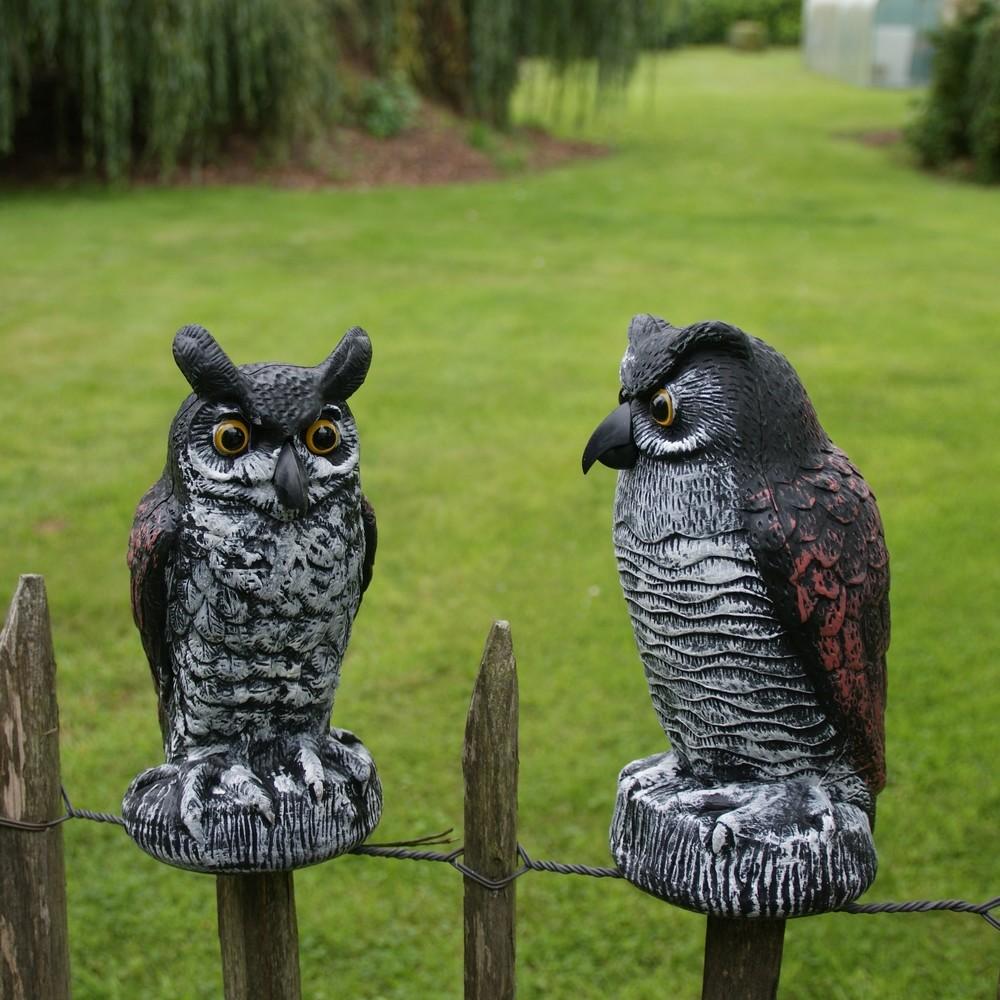 Vogelverschrikkers uilen