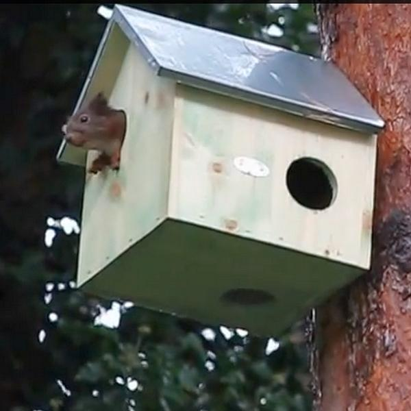 Woonhuisje voor eekhoorns